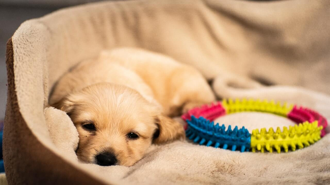 sleeping puppy | Ultimate Pet Nutrition