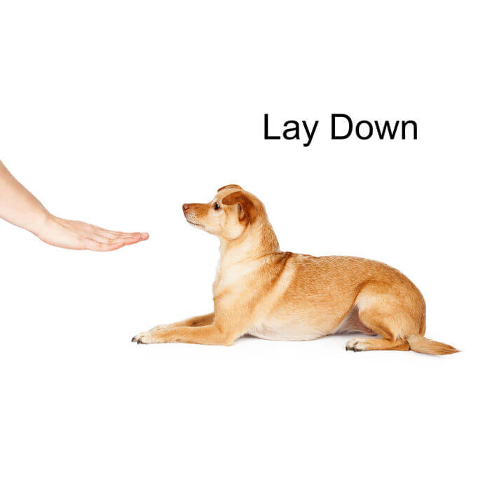 hand signal for dog | UPN