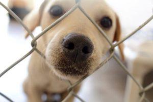 dog in fenced yard   UPN