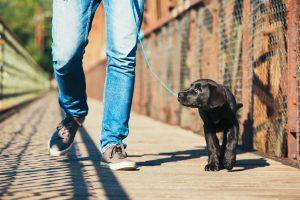 leash training | Ultimate Pet Nutrition