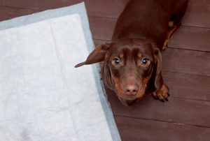potty training | Ultimate Pet Nutrition
