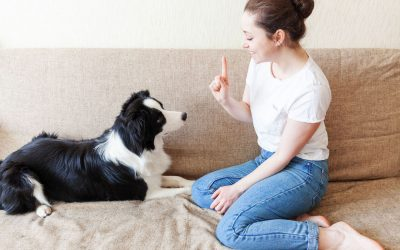Puppy Training And Behavior: How To House Train A Puppy