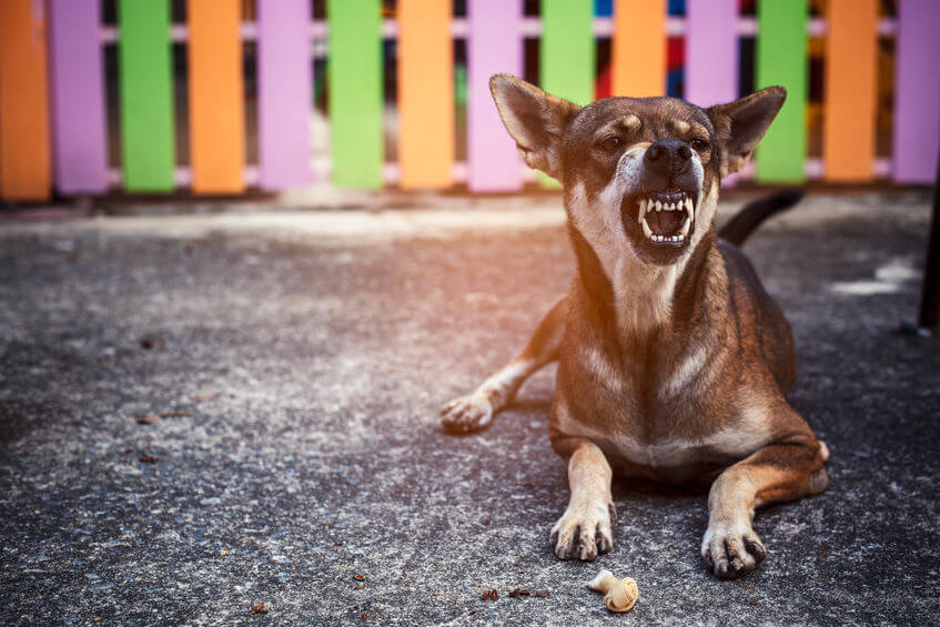 food aggression | Ultimate Pet Nutrition