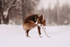 tail chasing   Ultimate Pet Nutrition