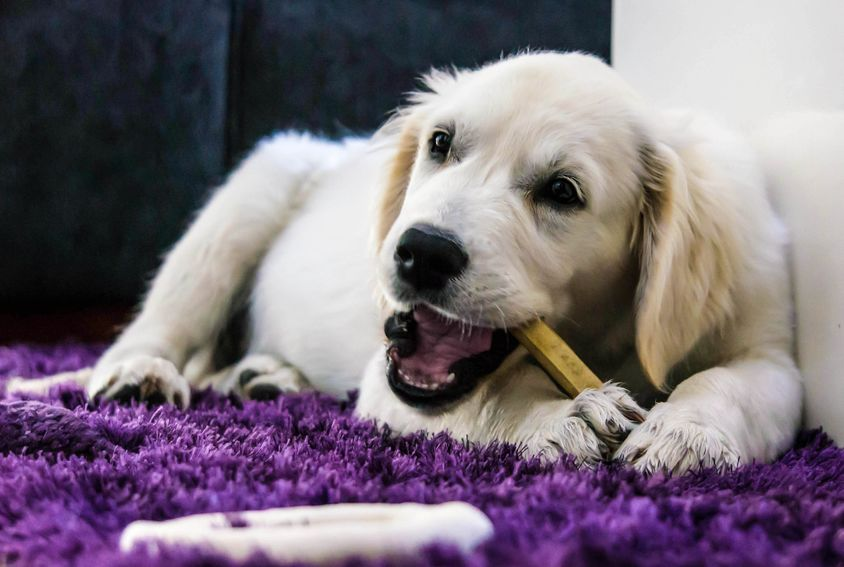 dog chewing stick | Ultimate Pet Nutrition