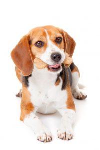 dog eating treat   Ultimate Pet Nutrition