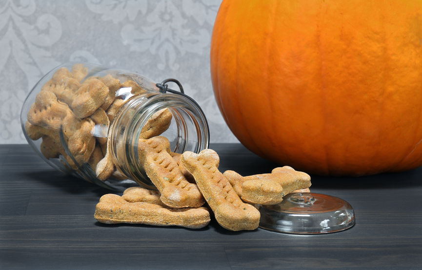 Easy Pumpkin Dog Treats And Recipes To Try At Home