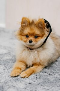 spaying dog | Ultimate Pet Nutrition