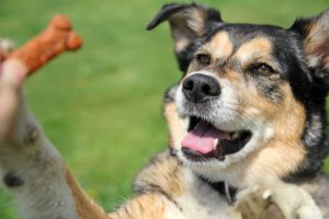 dog treat | Ultimate Pet Nutrition