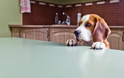 Can Dogs Eat Oatmeal? Is Oatmeal Healthy For Your Dog?