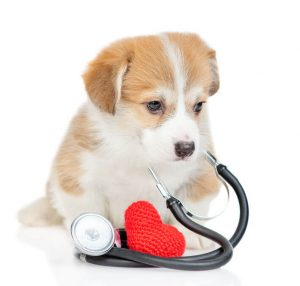 heart health   Ultimate Pet Nutrition