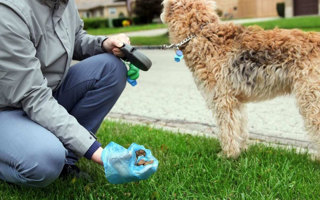 The Ultimate Guide to Dog Poop (everything you need to know)