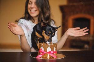 dog birthday cake | Ultimate Pet Nutrition