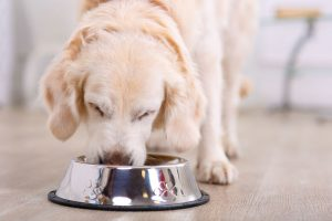 dog eating | Ultimate Pet Nutrition