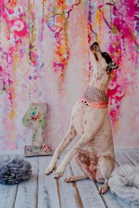 puppy birthday | Ultimate Pet Nutrition