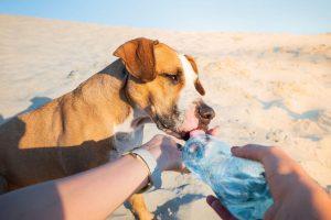heat stroke in dogs | Ultimate Pet Nutrition
