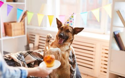 Puppy Birthday Party Ideas: Fun Ways To Celebrate Your Puppy's First Birthday