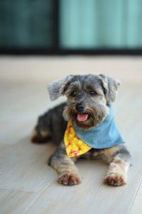 diy dog bandanas | Ultimate Pet Nutrition