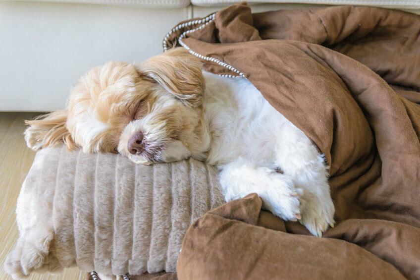 diy dog bed | Ultimate Pet Nutrition