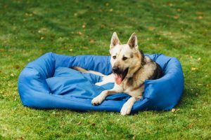 how to make a dog bed | Ultimate Pet Nutrition