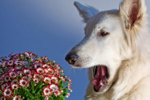 why is my dog wheezing | Ultimate Pet Nutrition