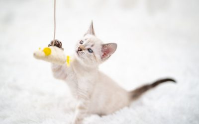 DIY Cat Toys: How To Make Toys For Your Pet Using Household Items