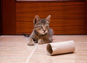 diy cat toys   Ultimate Pet Nutrition