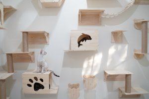 diy cat shelves | Ultimate Pet Nutrition
