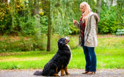 Dog Training Tips: How To Teach A Dog To Sit