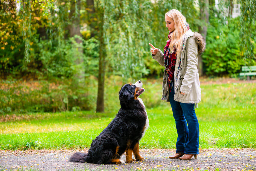 how to teach a dog to sit | Ultimate Pet Nutrition
